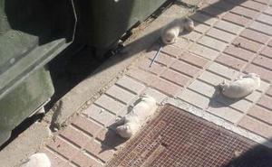 Abandonados varios cachorros neonatos al lado de un contenedor en Jaén