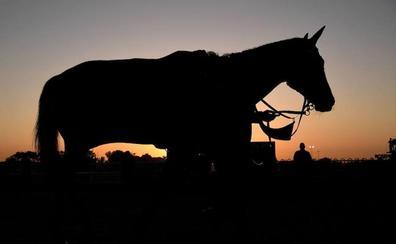 Andalucía activa la alerta sanitaria por un caso de Fiebre del Nilo en un caballo en Almonte