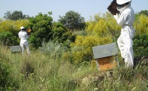 Más de 240.000 euros en ayudas para el sector apícola almeriense