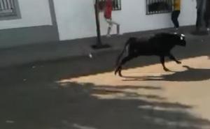 16 heridos, entre ellos un bebé y tres niños, al escaparse una vaquilla en un festejo taurino
