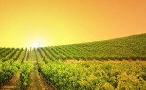Jaén produce más vino y de mejor calidad