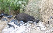 El cuerpo de una vaca sin vida pasa todo el fin de semana entre escombros