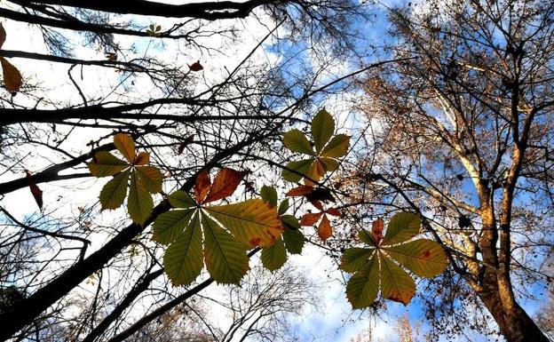 La aemet prev un ligero ascenso de las temperaturas en la provincia de ja n ideal - Tiempo los villares jaen ...