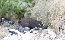 El cadáver de una vaca, entre escombros en Granada
