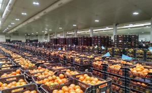 Agroponiente y Vegacañada integran sus empresas en un único proyecto