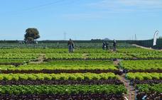 Almería es la provincia que menos recibe de los pagos anticipados de la PAC