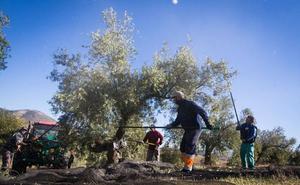 Jaén recibe 160 millones como anticipo de la PAC