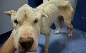 Condenado por maltrato tras la muerte de cuatro de sus cinco perros en una finca de Bayárcal