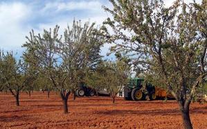 Caja Rural tramita ya a sus clientes los seguros de cultivos herbáceos, almendro y olivar