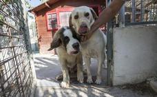 ¿Cuantos perros puedes tener como máximo en tu domicilio en Granada?