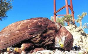 Aislados «casi todos» los postes que electrocutaron a más de 50 aves