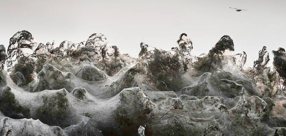 Las arañas del terror tienden su 'red de redes'