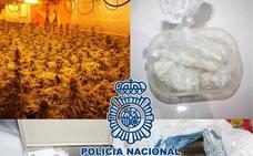 Desmantelan dos plantaciones a gran escala de marihuana en viviendas de Granada
