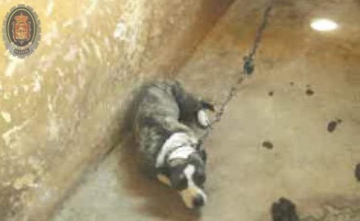 Catorce intervenciones contra el mismo joven por maltrato animal en Granada