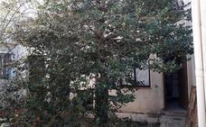 La Junta cambia el proyecto y el árbol del IES de Siles no será cortado