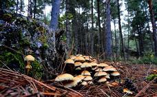 10 setas útiles para el bosque que puedes encontrar en Granada