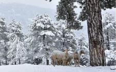 Aviso amarillo por nevadas este domingo en la provincia de Jaén