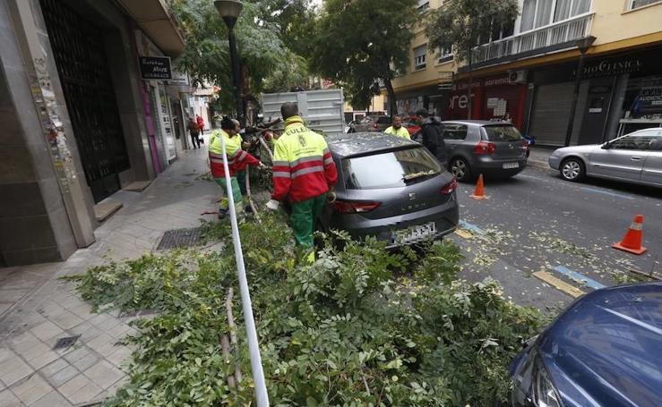 El temporal provoca la caída de un árbol en Granada