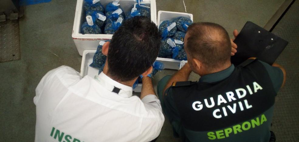 Sexta incautación de pescado en seis meses en Guarromán