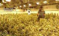 Incautadas 24.000 plantas de marihuana en una finca de Níjar