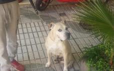 Un perro muerde a su propietaria y le provoca heridas en cara y brazos en Almuñécar