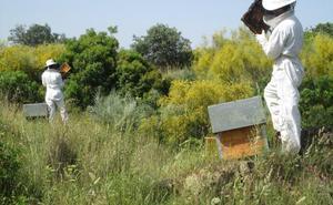 Los productores de miel dan la voz de alarma ante un panorama «desolador»