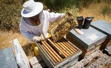 Granada, segunda provincia andaluza en la producción de miel ecológica