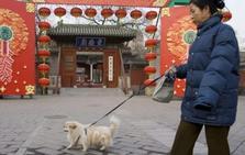 Polémica por una ciudad china que prohíbe pasear perros en horas diurnas