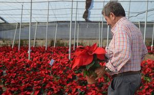 Almería es clave en el aumento de la exportación nacional de planta ornamental y flor