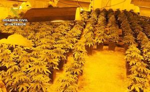 Intervenidas más de 8.000 plantas de marihuana en Granada con 29 investigados en el mes de octubre