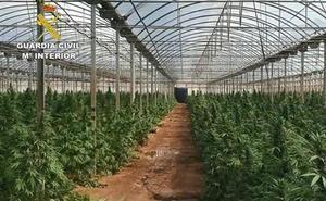 Descubren un súper invernadero de marihuana con 9.000 plantas