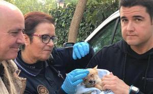 Encuentran 56 perros en estado lamentable en la casa de una mujer de 56 años