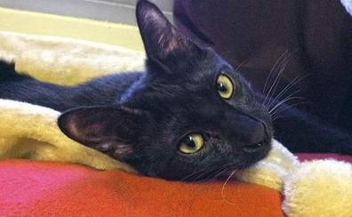 Seis meses de cárcel al militar que mató de un disparo a Negrito, el gato de un soldado, en un cuartel
