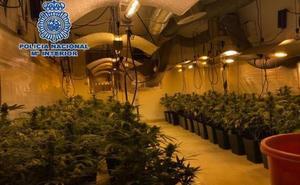 Lo último en cultivar marihuana: una banda ponía música clásica las 24 horas a las plantas