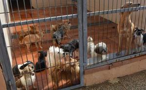Buscan interesados para adoptar los 56 perros rescatados tras ser maltratados en Alicante