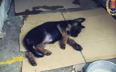 La Policía Local de Granada adopta a un cachorro tras detener a su dueño por maltrato