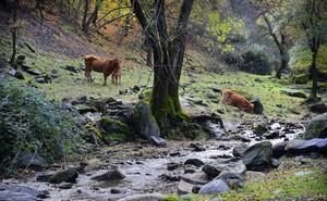 12 bosques y parajes naturales para disfrutar del otoño en Granada