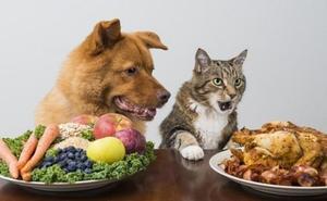 ¿Por qué es tan importante cuidar la alimentación de nuestra mascota?