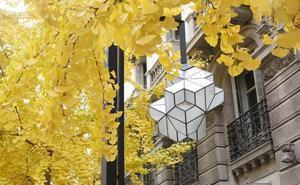 Un 'fósil viviente' y otros árboles que tiñen de amarillo la ciudad de Granada