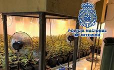 Un policía nacional fuera de servicio descubre 1.100 plantas de 'maría' en el sótano de un chalet