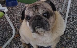 Una familia de Granada ofrece 1.000 euros de recompensa a quien encuentre a su perro