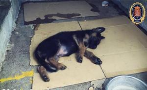 Miles de muestras de cariño y agredecimiento a la Policía Local de Granada tras adoptar a un cachorro maltratado