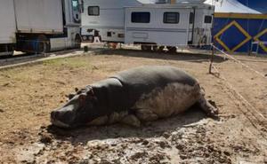 Animales mal cuidados y abandonados: así es el 'circo de los horrores' que viaja por Granada