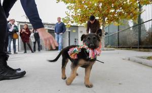El cachorro adoptado ya se prepara para ser miembro de la Policía Local