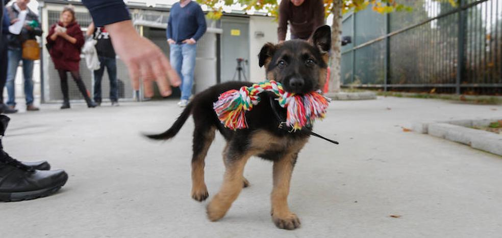Se llamará Stan Lee: Twitter elige nombre para el cachorro adoptado por la Policía Local de Granada