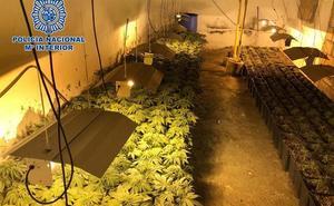 Tres detenidos por cultivar 355 plantas de marihuana en una casa ocupada en Los Molinos