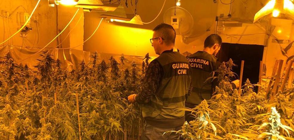Detenidos con dos plantaciones de marihuana con 'última tecnología' en Arjona