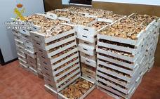 Intervenidos en Granada casi 8.000 kilos de níscalos durante la campaña por recolección irregular