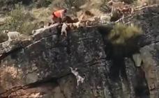 Polémica por una cacería en Cáceres que acaba con 12 perros y un venado cayendo por un barranco