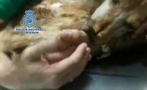 «Gracias a la colaboración ciudadana, han sido detenidas 10 personas en Málaga por maltratar a 16 perros en fincas y viviendas»